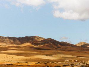 Location de voiture Aéroport de Fuerteventura